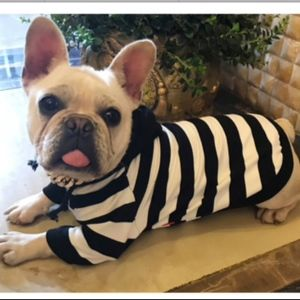 Other - Black and White Stripe Dog Hoodie